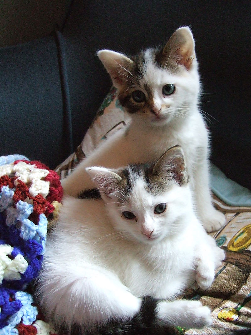 Kittens 014