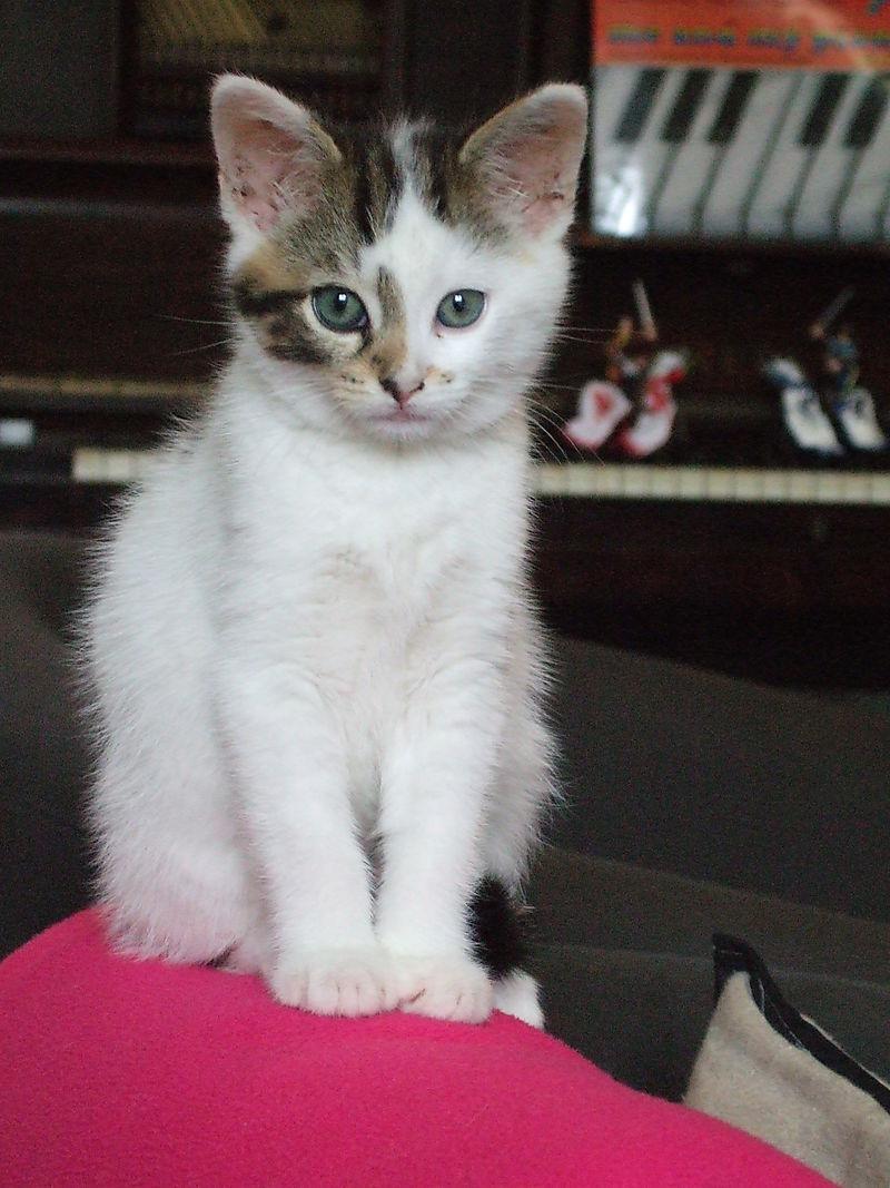 Kittens 080