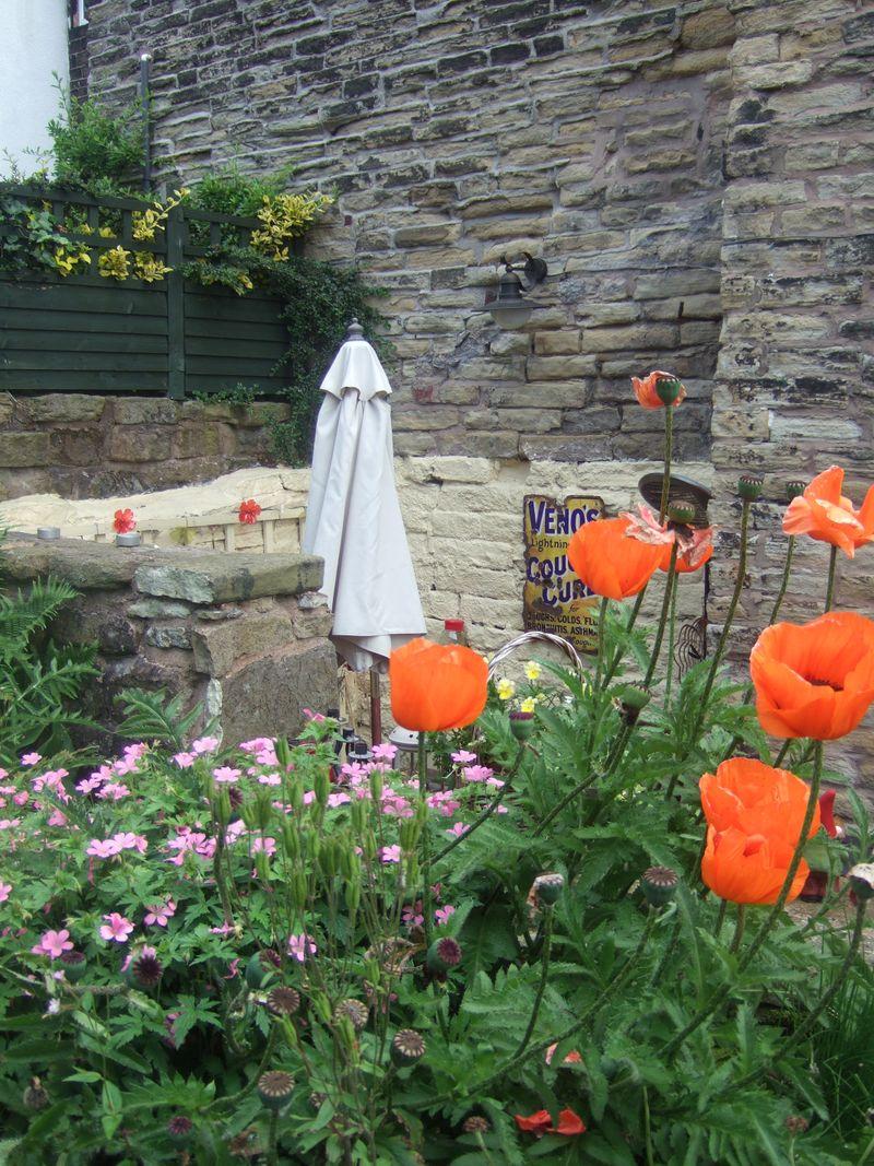 Steph's garden 003